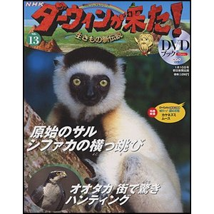 NHKダーウィンが来た!DVDブック  13号 シファカ/オオタカ|roudoku