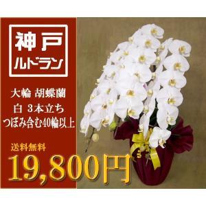 送料無料 ラッピング無料 税込 大輪 胡蝶蘭 3本立ち 白色 つぼみ含む 40輪 以上 神戸 行列のできるお花屋さん