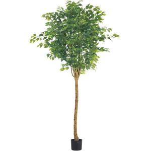 人工観葉植物 210cm ラウンドフィカスツリー(ナチュラルトランク)[LETR7642]|ryoccadou