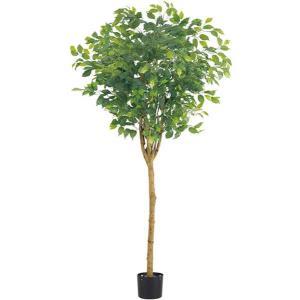 人工観葉植物 180cm ラウンドフィカスツリー(ナチュラルトランク)[LETR7641]|ryoccadou