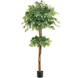人工観葉植物 210cm ダブルフィカスツリー(ナチュラルトランク) [LETR7639]|ryoccadou
