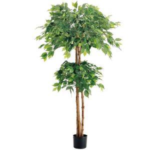人工観葉植物 150cm ダブルフィカスツリー(ナチュラルトランク)[LETR7637]|ryoccadou