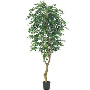 人工観葉植物 210cm フィカスツリー(ナチュラルトランク) 造花 [LETR7593]|ryoccadou