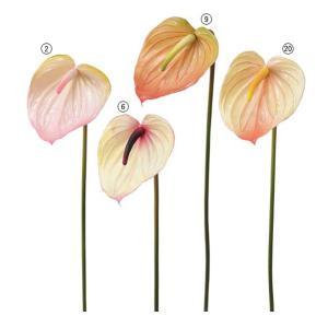 造花 花 フラワー アンスリウム 人工観葉植物 FLSP3883|ryoccadou