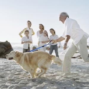 PETBABA(ペットババ) 犬 リード 犬用短引き ショートリード 中大型犬対応 調節可能 反射素材 丈夫 手に優しい (45-60cm,|rysss