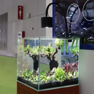 アクアリウム ライト 水草育成 50w led 水槽照明 60cm 淡水 熱帯魚用 植物 観賞魚 クリップ式 (Asta 120水草)|rysss
