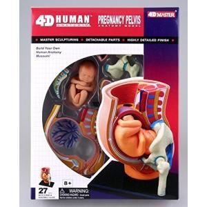 青島文化教材社 スカイネット 立体パズル 4D VISION 人体解剖 No.06 妊娠解剖モデル|rysss