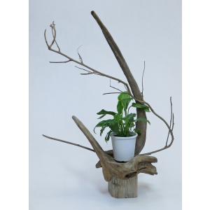 流木アート 花台 A0985 飾り台  フラワーベース 66.7cm  インテリアに最適|ryuubokua-to