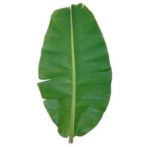 沖縄県産バナナの葉(1枚)