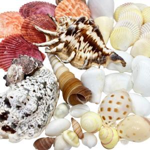 【送料無料】貝殻(貝がら)セット 40個 シェルミックス|ryuuka