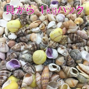 お買い得 貝殻(貝がら)パック 1kg|ryuuka