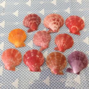 ミニサイズ!ヒオウギ貝10枚セット|ryuuka