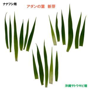 ナナフシ用 アダンの葉 新芽(5cm〜10cm) 17枚|ryuuka