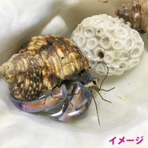 浜比嘉島の天然海水2L ryuuka 03