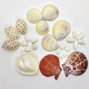 貝殻(貝がら)セット 26個入 ハート貝|ryuuka