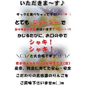 長野 サンふじりんご大玉 限定10kg 訳あり 送料無料 こだわり信州産サンふじりんご ご家庭用|s-asahiya|03