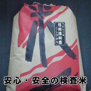お米 米 10kg 29年度米 送料無料!長野県旧浅科村産特A米10Kg|s-asahiya
