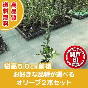 高品質 オリーブの木 好きな品種を2本選べる お得なセット 9cmポット 送料無料(関東・東海・関西・北陸・信越に限り)  レビューを書いて特典あり s-engei