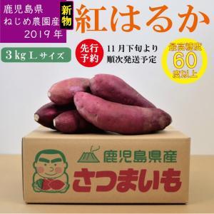 紅はるか さつまいも 鹿児島県産 3キロ 大判サイズ 糖度60以上 自家製堆肥栽培 かごしま根占農園産|s-kandoichiba