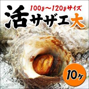 【お中元/ギフト】業務用サザエ大サイズ 100g〜120g×10ヶ (冷凍便冷蔵便同梱可)