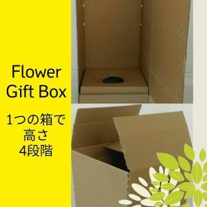 ギフトボックス 花 観葉植物 蘭 鉢花 対応可 発送箱 250x250x高さ4段階調整可 20枚/set|s-one-trading-jp