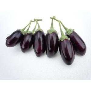 茄子の種 ぼうや茄子(小ナス) 20粒