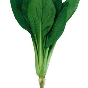 色濃く大葉、根に馬力あり、軟弱徒長しない。高温下のハウス栽培で病気の発生を抑えるためにも生育途中の多...
