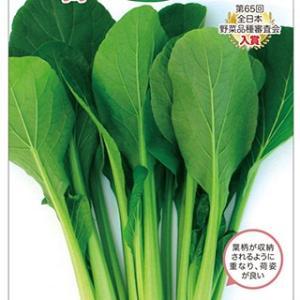 濃緑色でつやがあり、商品性は高い。耐暑性・耐寒性を持ち合わせ、乾燥に強く、水でのコントロールがしやす...