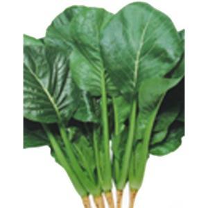 濃緑葉でやわらかい味も良く、年中栽培可能! ■容量は季節により変更となる場合がございますが、価格に変...