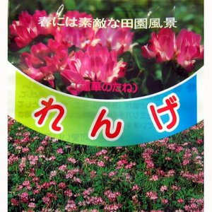 春には辺り一面に紫紅色の可愛い花が咲き素敵な田園風景をかもしだします。