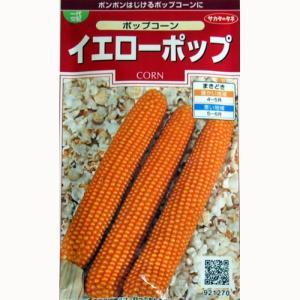 家庭で簡単にポップコーンがつくれる楽しいトウモロコシです。穂は細長い棒状で、やや大粒、完全に熟させて...