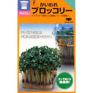 スプラウトの種 かいわれブロッコリー (ブロッコリースプラウトの種) 小袋 約50ml|saien-club
