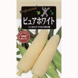 トウモロコシの種 春まき ピュアホワイト ( とうもろこしの種 ) 50粒入り ガーデニング 家庭菜園におすすめの 野菜種♪