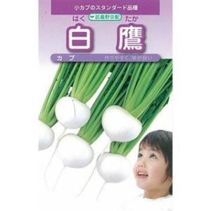 カブの種 白鷹小蕪 小袋(約4ml) ( 野菜の種 )