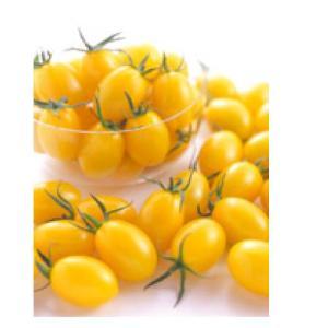 ミニトマトの種 イエローアイコ 実咲 小袋