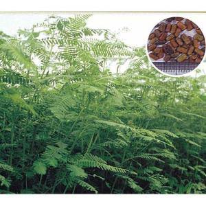 農業資材 緑肥の種子 セスバニア 田助 (緑肥)1kg 土づくり 土壌改良におすすめの資材♪
