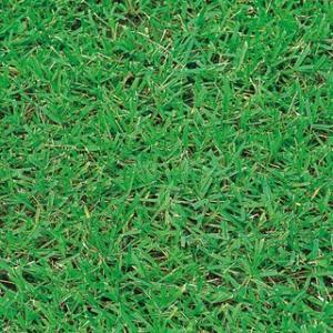 性質は非常に強健で管理がしやすい。 ほふく茎で草丈低く広がる。 発芽初期生育は遅い。 【暖地型芝草】...
