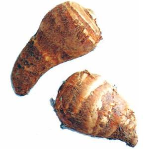 里芋(さといも) 予約 唐の芋 種芋 300g(2〜3個入り)