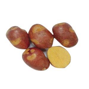 じゃがいも(馬鈴薯) インカのひとみ 種芋 1kg入り (予約販売)