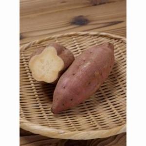 サツマイモの苗 安納芋 25本 予約販売...