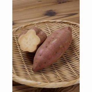 サツマイモの苗 安納芋 100本 予約販売...