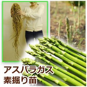 超ビッグの3Lサイズです。 あまり出回らない大きさです!  アスパラガスは種から栽培を始めると収穫ま...