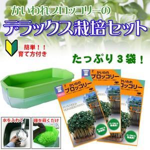 ブロッコリースプラウト 栽培セット デラックス栽培セット (栽培容器付き)