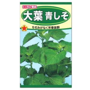 トーホク 大葉青しそ 種 たね 紫蘇 シソ 種子