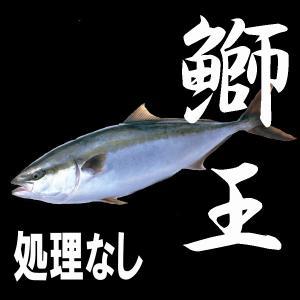 ブランド養殖ぶり 鰤王 丸魚(ラウンド)