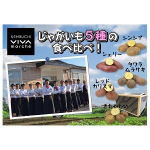 A-3 剣淵産:絵本の里けんぶちVIVAマルシェ 煮物にオススメ!じゃがいも4種の詰合せ 2L〜Mサイズ・約8kg・1箱|saijo