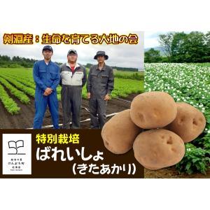 産直品 A-11 剣淵産:生命を育てる大地の会 特別栽培ばれいしょ(きたあかり) saijo