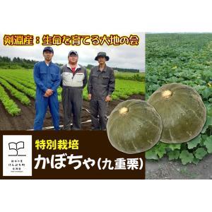 B-5 剣淵産:生命を育てる大地の会 特別栽培かぼちゃ(九重栗) 4〜7玉入・約10kg・1箱|saijo