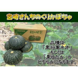 D-1 美深町産: 宮崎さんちのくりかぼちゃ(栗将軍ネオ・栗ゆたか) 4〜6玉入・約9kg・1箱|saijo