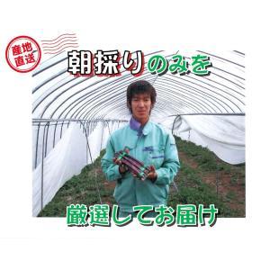 【C-2】士別産:おがた農園直送品 おがたさんちのグリーンアスパラ(露地栽培) 2L〜L込・約1kg入・1箱|saijo
